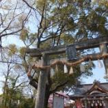 『桜咲く参道をウォ―キング🌸』の画像