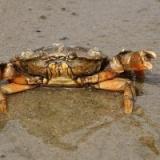 数千年前の中国人「うわあああ蟹に殺されるううううう!!!」