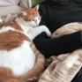猫とぬくぬく