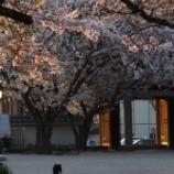 『桜と猫・・鎌倉』の画像
