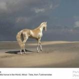 『アハルテケ「黄金の馬」』の画像