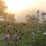 『尽きゆく花』の画像