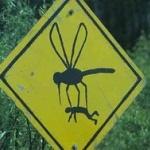 ブラジル大統領、「蚊との戦争」を宣言