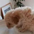 子イヌが匂いにつられてやってきた。ちょうどお皿が空いていた → 子犬はこうなっちゃう…