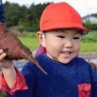 『つき組(2歳児クラス)「サツマイモ掘り」のようす』の画像