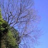 『クモヒトツナイ』の画像
