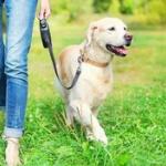 【朗報】犬との暮らしは寿命を延ばすことが判明したぞ!おまえら、急いで犬を飼え!