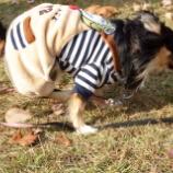 『ドッグランと秋の公園で遊ぶ🍂』の画像
