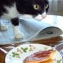 目が合うと必ず愛猫がすること