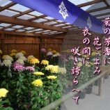 『フォト短歌「菊祭り」』の画像