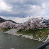 『二戸の桜』の画像