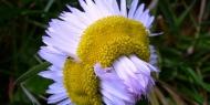 [画像]ちょっと変わった珍しい花