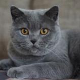 『誰でも簡単にネコと仲良くなれる方法が判明』の画像