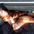1月31日 メバル五目釣り