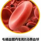 『私の光マイクロバブル入浴研究Ⅲ(48)毛細血管流の再生問題』の画像