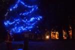 植物園でクリスマス!今年も『かたのカンヴァス』が開催される!~12/23(火・祝)@大阪市立大学理学部附属植物園~