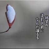 『うつせみ』の画像