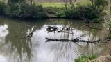 今日カメが大量にいる池見つけたんだけど(※画像あり)