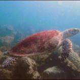 『ダイビング始めました~オープンウォーター海洋講習2日目~』の画像