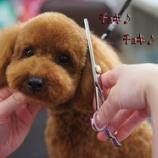 『愛犬のカットならワイズドギーにお任せ!記念写真もプレゼント』の画像
