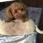『愛犬アフロの紹介』の画像