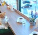 猫カフェでくつろぐ猫が話題