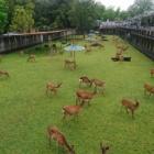 『子鹿  』の画像