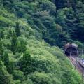 しなの鉄道115系@S16編成(深い森を抜けて)