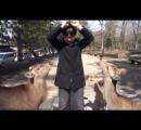 「狂犬病が怖い」鹿に噛まれ中国人パニック 外国人急増で奈良公園の鹿がらみ「人身事故」過去最高に