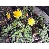 『また春が一歩』の画像