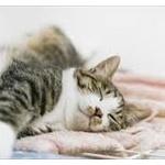 【ペット】猫が布団に入ってくる理由って?