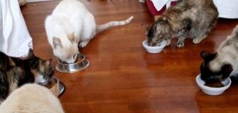 ヴィーガンさん、飼い猫の餌からもお肉を排除 ←虐待だろ