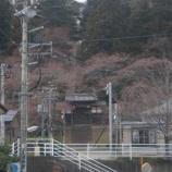 『大年寺のサクラ2010』の画像