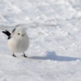 『【年末の癒し】めっちゃ可愛い鳥を発見したから見て!』の画像