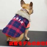 『とある日の看板犬アグーの1日に密着!! part2』の画像