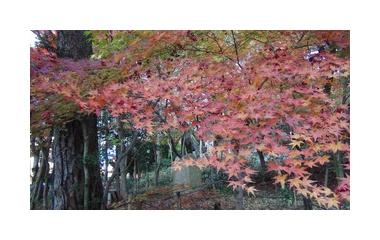 『有馬温泉の紅葉。』の画像