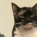 【ネコ】 飼い主の隣にムスッとした顔で猫がいた。どうしたの? → こうなります…