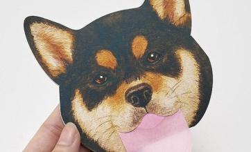 柴犬好き必見!!顔をペロペロされるような気分のあぶらとり紙登場