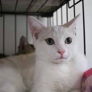 NPO法人みなしご救援隊犬猫譲渡センター東京支部のblog