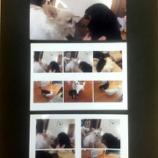 『iPhone/iPadから写真のレイアウト印刷。キヤノンでも、エプソンでも、AirPrint非対応プリンターでも。』の画像