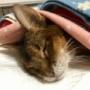 猫たちと暮らす幸せ~♪