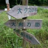 『「上谷の大クス(かみやつのおおくす)」~埼玉県下で一番の巨木です~』の画像