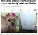 庭で昼寝中の犬、配達員が放り投げた荷物で致命傷となり安楽死へ(米)