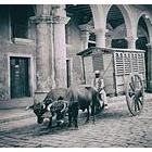 『「救急車」と ambulanceとmeat wagon』の画像