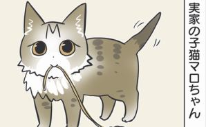 """実家の子猫が見せる""""こだわり"""""""
