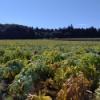 夏から秋に〜群馬の緑のある風景〜