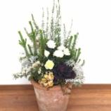 『エリカ・レインドロップとバラのコンテナガーデンを高低差がある寄せ植えを作りました。』の画像