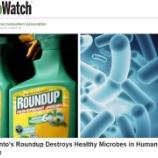 『除草剤が破壊する腸内細菌叢』の画像