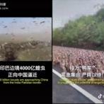 中国、4000億匹のバッタに対抗するため10万匹のアヒルを投入