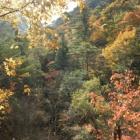 『森の散策と鼓ケ滝』の画像
